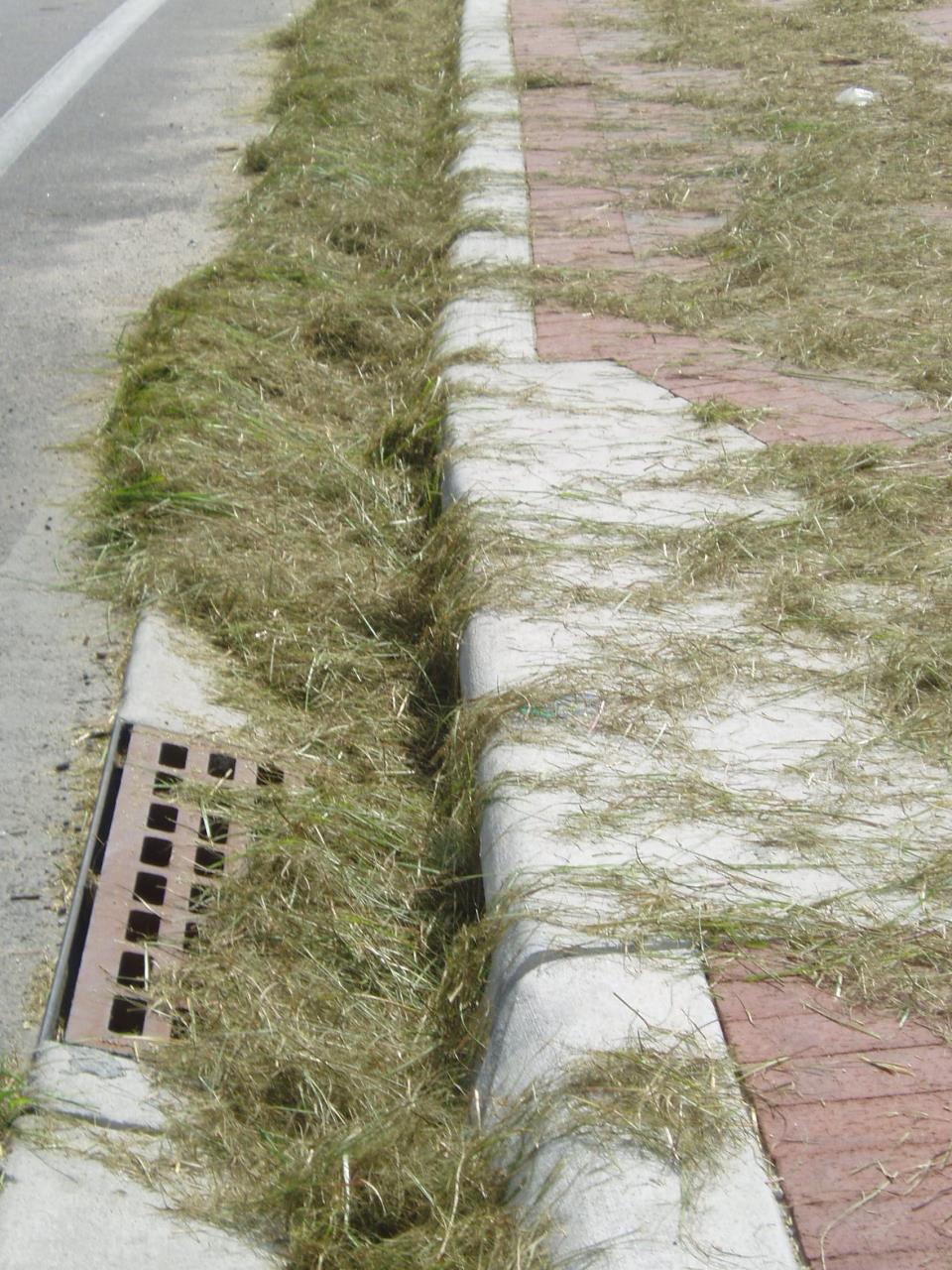 storm drain with grass